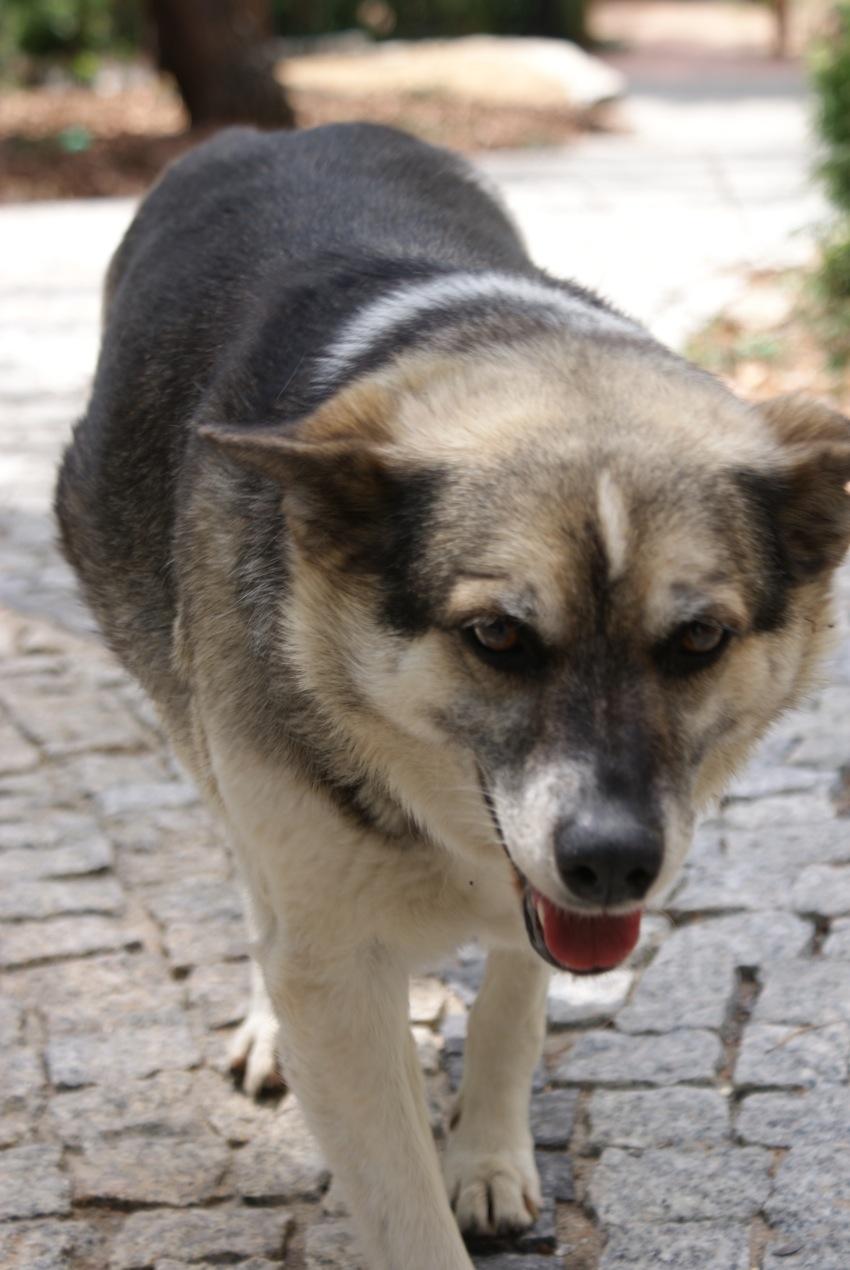 """Następny pies w menażeri to """"Foka"""" pies ma już 105 lat i przeżył wszystkich"""